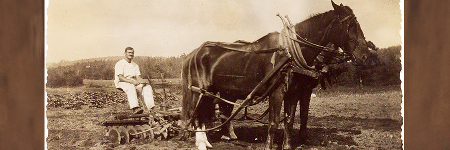 1915 Giuseppe Cavicchio plowing the vegetable fields at the main farm, 110 Codjer Lane, Sudbury, MA