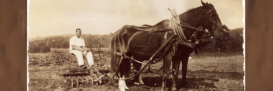 1915 Giuseppe Cavicchio plowing the vegetable fields at the main farm, 110 Codjer Lane, Sudbury, MA